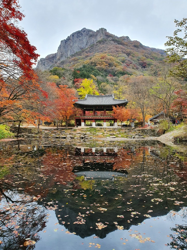 Backyangsa temple, November 이미지